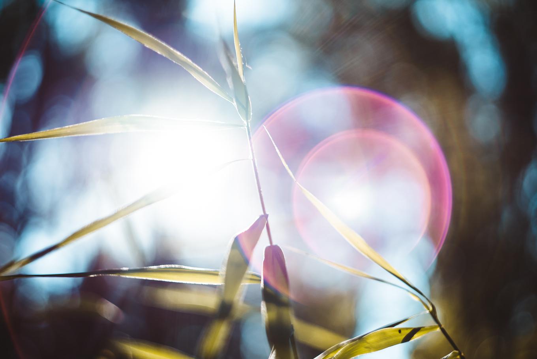 lens-flares-vintage-lens-1